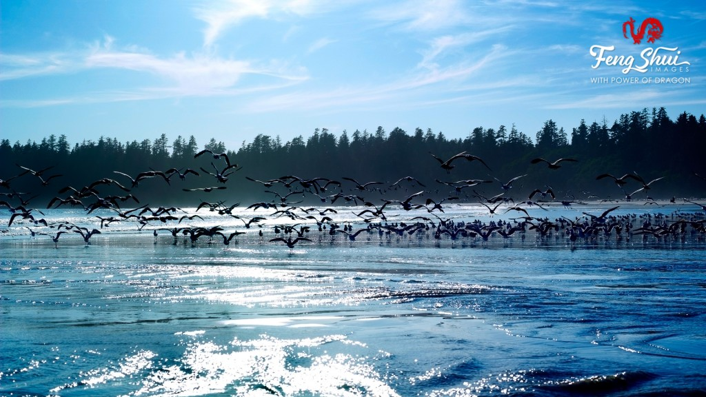 Hundred-Birds